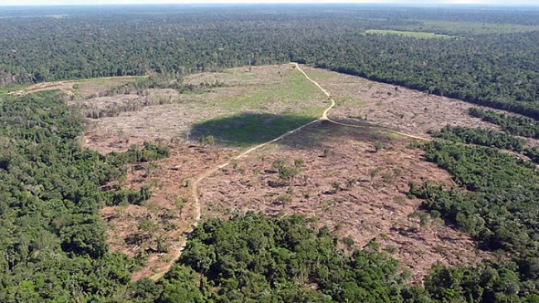99% do desmatamento no Brasil em 2019 foi ilegal, segundo o relatório