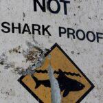F5 – Bichos – Um tubarão puxa um garoto de 10 anos de um barco em um ataque na costa da Austrália