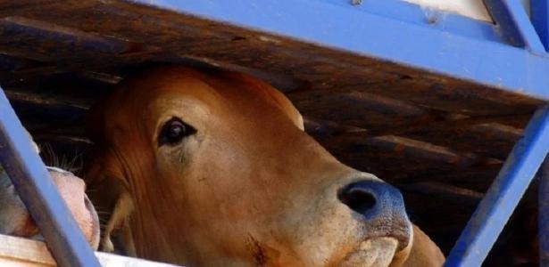 A JBS transporta a pecuária e se opõe à política apenas do fornecedor que mantém a Amazônia – 27/07/2020.